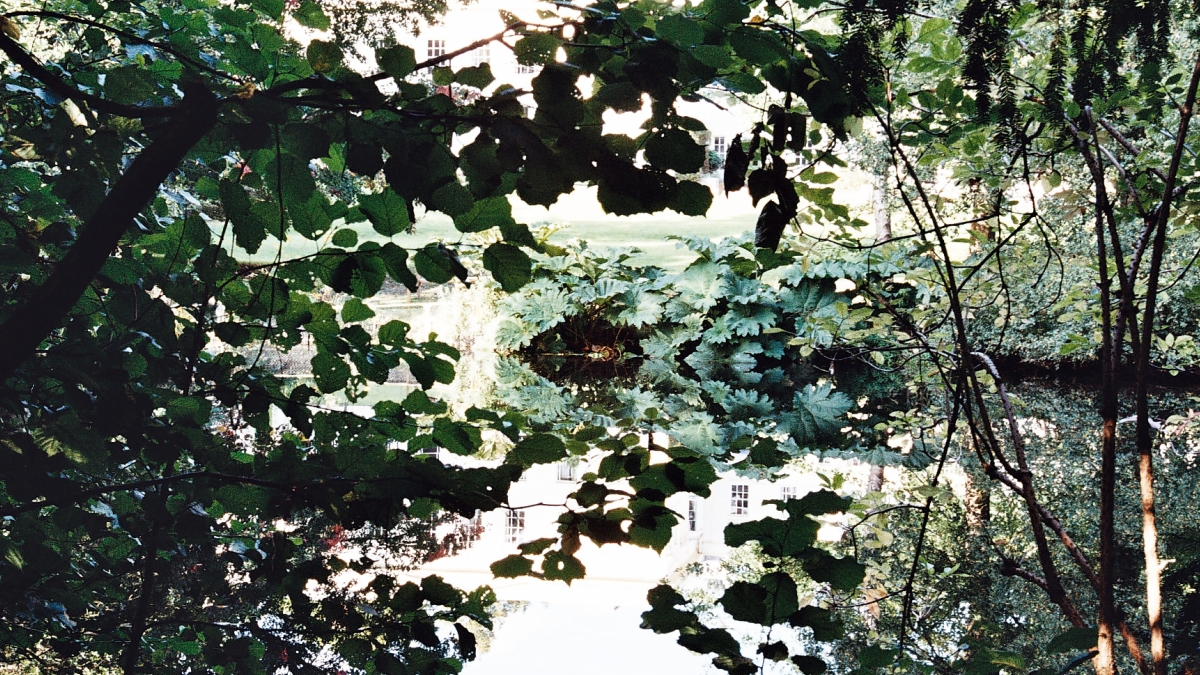 gunnera reflected